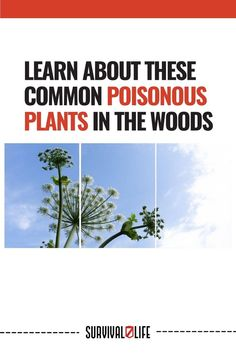 Being out in nature sure is one of the best things there is. But like any other good thing, spending time in the woods or in the mountains means you're exposed to certain dangers. One being poisonous plants. #PoisonousPlants #WoodsPoisonousPlants #CommonPoisonousPlants