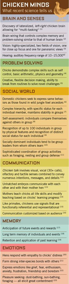 What science tells us about chicken cognition and behaviour.  Infographic from Free From Harm.