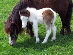 I want a farm with minature horses, burros, llamas, goats . . .