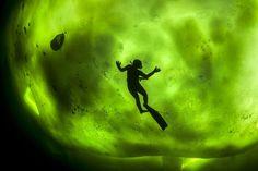 Aurora bajo el agua. La silueta de un buzo es vista bajo una capa de hielo, mientras bucea en el Círculo Ártico, cuando se presentaba el fenómeno de Aurora Boreal (Northern Lights). Para tomar la imagen, el fotógrafo abrió un agujero sobre el hielo de 30 centímetros de grosor y buceó unos 6 metros bajo la superficie para retratar a su novia y a un amigo en perspectiva con las luces. Geoerge Karbus/Solent News/Rex