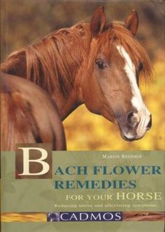 Bach Flowers Remedies For Your Horse