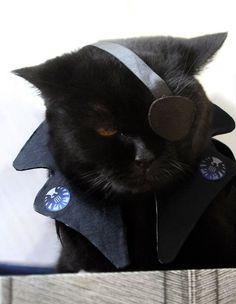 nudityandnerdery: migraine-sky: my cat cosplays Nick Fury Aw, adorable Nick Furry. Cute Cats, Funny Cats, Funny Animals, Cute Animals, Happy Animals, Halloween Cat, Costume Halloween, Halloween Photos, Happy Halloween