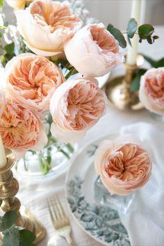 Romance of the Rose Juliet Rose von David Austin Wedding & Event Roses.