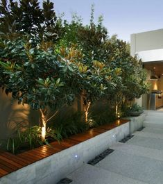 Planting ideas – front yard, Perth - All For Garden Front Yard Garden Design, Backyard Garden Design, Diy Garden, Garden Ideas, Fence Ideas, Perth, Modern Landscaping, Front Yard Landscaping, Modern Front Yard
