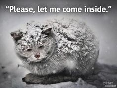 WARNING: Cats can lose the tips of their ears in the cold & can even DIE.
