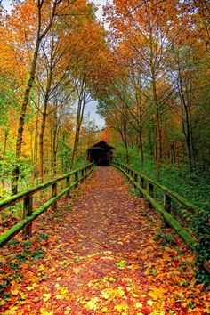 .I REMEMBER AN OLD WALKWAY JUST LIKE THIS ONE..I HAD TO USE IT GOING HOME FROM SCHOOL.  SOMETIMES IT WAS SCARY.... FALL IS SO BEAUTIFUL** jerry g