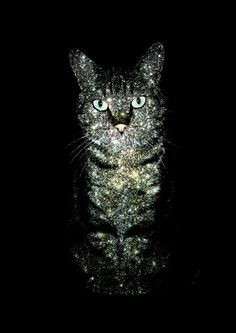 Meow - I see