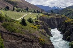 Why Bungee Jump When Wine Awaits? - NYTimes.com New Zealand