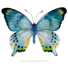 No68 Laglaizei Butterfly 8x10 Signed Fine Art by AmyKirkpatrickArt, $25.00