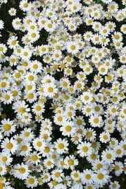 Resultado de imagem para pinterest flores