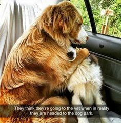 When these two were there for each other before the dreaded vet. | 24 Photos That Prove There Is No Truer Friend Than A Dog