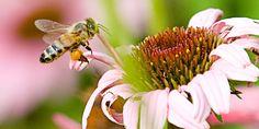Una abeja posándose sobre una flor