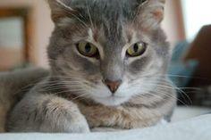 Instrucciones para las dosis de Frontline Plus en gatos | Muy Fitness