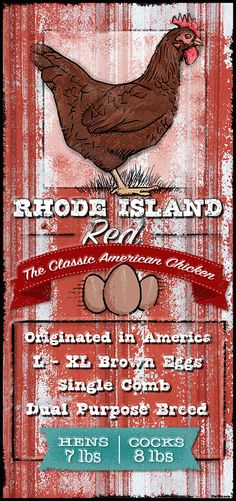 Rhode Island Red Breed Information Tin Sign – TinWit.com. Heavy duty, real metal tin signs shipped to all 50 states. Made in the USA!
