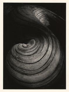 Jean Dieuzaide: Racine de saule, 1969