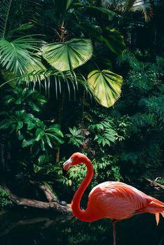 Flamingo Beach Daybreak Designer Wallpaper - My Wallpaper Tier Wallpaper, Flamingo Wallpaper, Summer Wallpaper, Animal Wallpaper, Cute Wallpapers, Wallpaper Backgrounds, Iphone Wallpaper, Beautiful Birds, Animals Beautiful