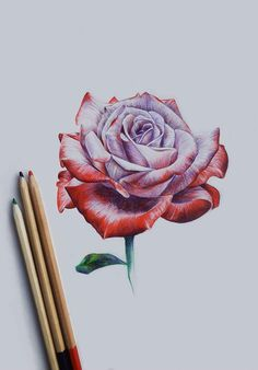 One year ago did my first full drawing using colored pencils, :D