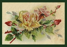 All sizes | Roses | Flickr - Photo Sharing!