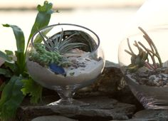Terrain Beach Terrariums || Explore at http://www.shopterrain.com/garden-plants/