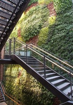 An awesome living green wall consisting of 14,000 different plants at an Anthropologie store.