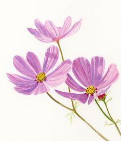 Three Pink Cosmos Blossoms by Sharon Freeman