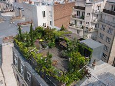Le toit-terrasse vu de haut : Un toit-terrasse verdoyant en plein Paris - Journal des Femmes Jardin