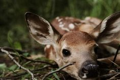 Fawn hiding in the grass from predators. Stay safe, little one.