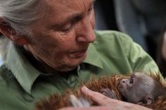 International Women's Day - Jane Goodall