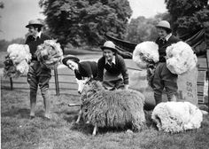 15th May 1940: Four members of the WLA (Women's Land Army), shearing sheep in London's Hyde Park. (Photo by Fox Photos/Getty Images) ~