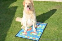 Picnic Blanket, Outdoor Blanket, Dogs, Living Alone, Doggies, Pet Dogs, Dog, Picnic Quilt