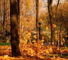 Floating Leaves, Madison, Wisconsin  photo via bringing