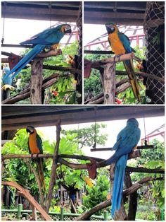 Ocean Park Ocean Park, Bird, Animals, Animales, Animaux, Birds, Animal, Animais