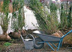 Les 8 étapes pour bien planter une haie - Détente Jardin Plantation, Wheelbarrow, Garden Tools, Moment, Gardens, Roots, Shrub, Plants, Tips