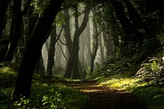 I want my wedding to be in a forest!! So pretty (Cascade Head, upper trail, near Lincoln City By PhotoScenics)