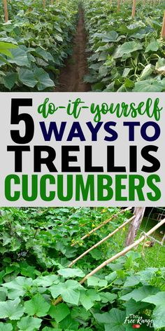 Growing cucumbers vertically helps you get a better harvest and healthier plants. Here are 5 cucumber trellis ideas for cucumbers to give you more room and healthier cucumbers in your vegetable garden