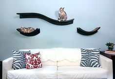 Introducing the new Lotus Cat Shelves from The Refined Feline, now available! These shelves were designed specifically to match the Lotus Cat Tower. They are made from the same materials and are available in both espresso and mahogany finishes, plus they use the same curves that are on the Lotus Tower. Together, the shelves and…