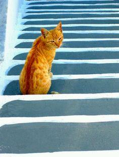 Lucky cat on Greek steps