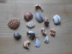 Frammenti di conchiglie materiali per creare 14 pezzi. C16