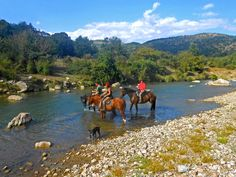 Ein glorreiches Wochenende auf dem Pferd für sowohl erfahrene als auch weniger erfahrene Reiter. Sie verbringen einen ganzen Tag in der grünen und schönen mediterranen Landschaft der Monti della Tolfa, reich an Passagen von historischem und kulturellem Interesse.