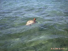 Paseo en barca desde Punta Allen, Shian Ka'an. Avistamiento de una tortuga..