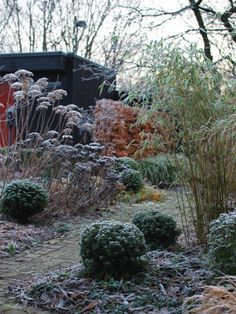 almbacken-winter-garden-grasses-gardenista