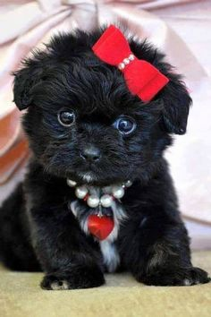 Simple Shih Tzu Anime Adorable Dog - 1f08df08ca13c3f0bece58b8fdf52f6c--cute-pictures-animation  2018_293536  .jpg