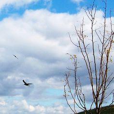 hawk dance #freshcityfarms, #naturepics, #DownsviewPark, #Toronto #Ontario, #Canada