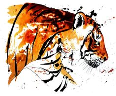 ARTFINDER: Bengal Tiger (A4) by Jane Laurie - With less than 2,500 individual Bengal Tiger's left in the wild, their plight is a desperate one.   I saw this individual male tiger with my own eyes when I ...
