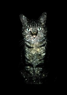 Sparkling Cats