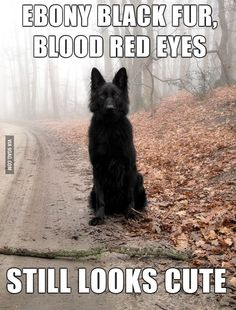Bad Luck Insanity Wolf