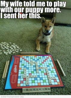 funny caption picture my wife told me to play with our puppy more board game