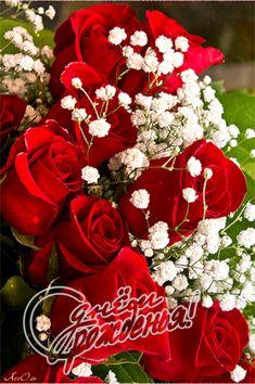 Красивые Розы, Открытки Ко Дню Рождения, Природоведение, Красные Розы, Сила Цветов, Свадебные Букеты, Сообщения, Растения, Цветы