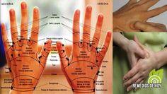¿Cómo se conecta la columna vertebral con nuestros órganos? Causas reales del dolor | Remedios De Hoy