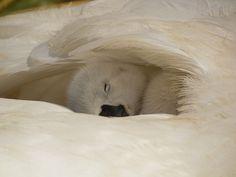 Perfect nest Сладкий сон под маминым крылом...